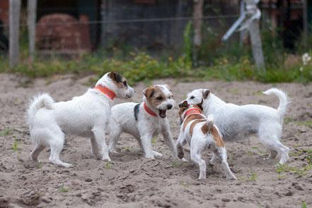 Verhaltensanalyse Ihres Hundes in der teamdogs Berlin Hundeschule