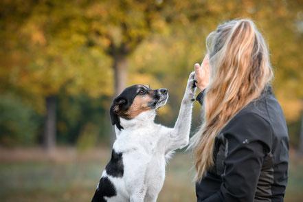 Mensch und Hund werden ein Team
