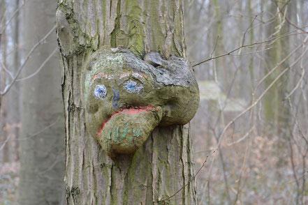 Foto: Ein Baumgeist, das ist ein Baum, der so gewachsen ist, dass an seinem Stamm mit Fantasie ein Gesicht zu erkennen ist. Bei diesem Geist wurde das Gesicht mit Wachskreiden zusätzlich nachgezeichnet.