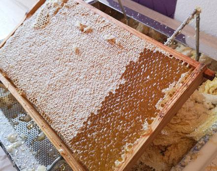 Eine Honigwabe reif zur Ernte im Juni