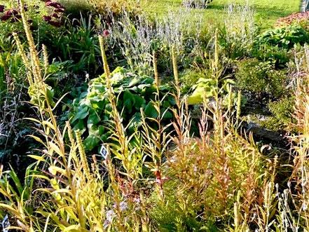 Wenn im Herbst viele Stauden bereits heruntergeschnitten sind, ragen die Samenstände von Ehrenpreis (Veronica spec.), Verbene (Verbena hastata) und Gelenkblume (Physostegia virginiana) wie Kerzen aus dem Beet heraus.