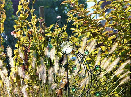 Lampenputzergras (Pennisetum alopecuroides 'Hameln')