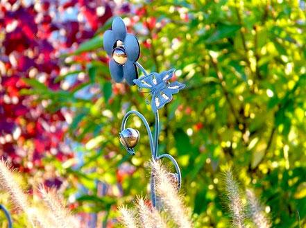 Schönes Farbenspiel vom dunkelroten Physocarpus 'Diabolo', Forsythie mit ihrem (noch) sattem Grün ...