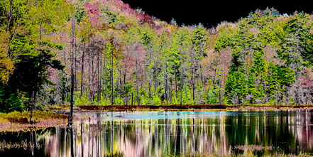 Fall Reflections - AAL009