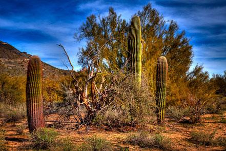 Arizona Landscape II - SWA001