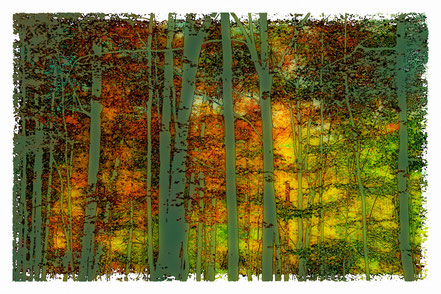 Enchanted Forest in Autumn - AAL002