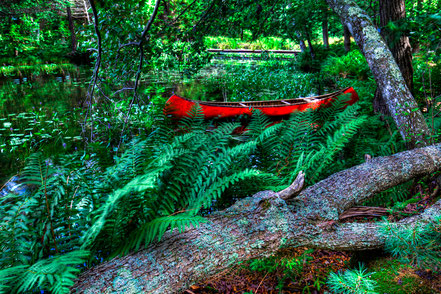 Canoe Among the Ferns - Old Forge, NY - ADKCK012