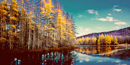 The Last of the Tamarack Color - Old Forge, NY - ADKA022