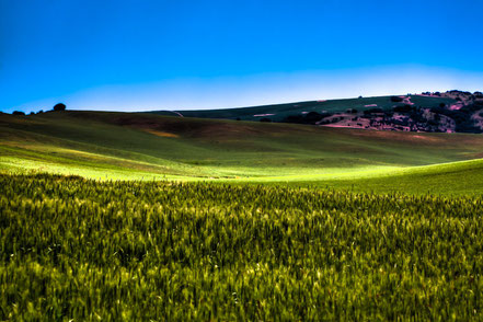 Sun Shinning on the Palouse Hills - NWP001