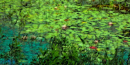 Lily Pads - An Abstract - AAL008