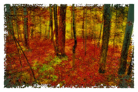 Autumn Carpet - AAL003