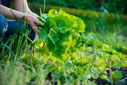 Salat aus der Region Gilching