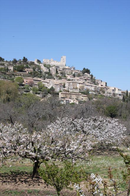 Bild: Lacoste im Frühling