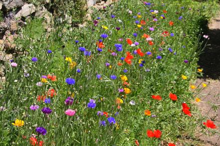 Bild: Wiesenblumen im Jardin de l´Abbaye de Valsaintes, Simiane-la-Rotonde