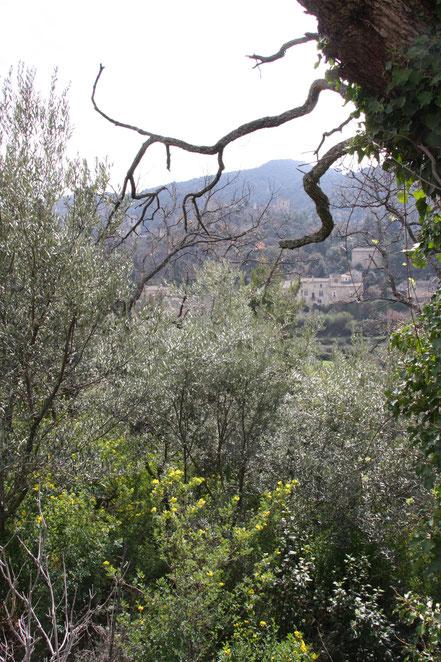 Bild: Oppéde-le-Vieux, Vaucluse, Provence