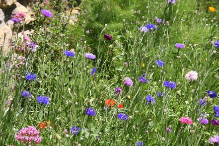 Bild: Wildblumen im Jardin de l´Abbaye de Valsaintes, Simiane-la-Rotonde