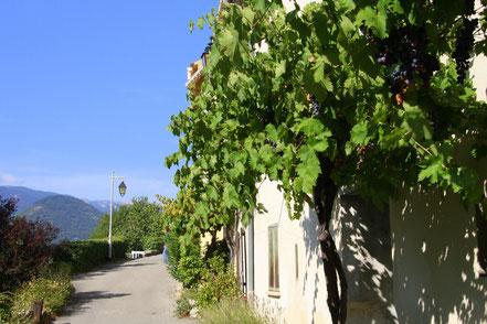 Bild: Montbrun-les-Bains, Drôme