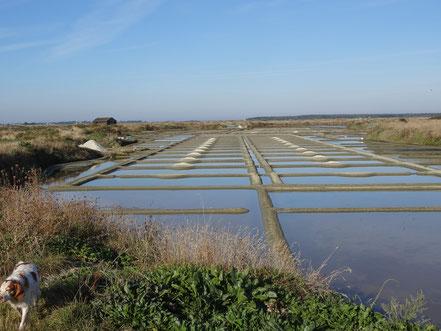 Bild: Salzgewinnung auf der Halbinsel Guérande
