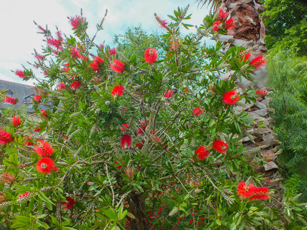 Bild: Le Jardin du Prieuré Locmaria - Botanischer Garten in Quimper