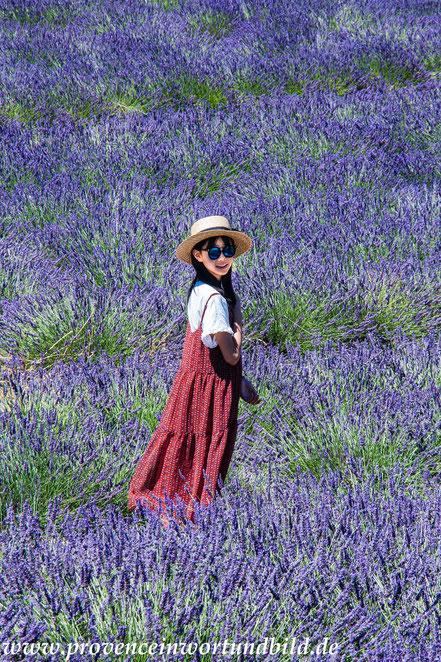 Bild: Lavendeltour bei Valensole
