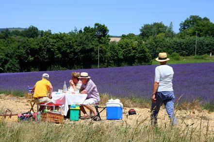 Bild: Picknick im Lavendelfeld bei Revest du Bion
