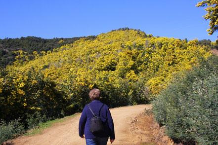Bild: Wanderung im Mimosenwald