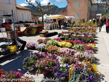 Bild: Blumenmarkt Oppéde