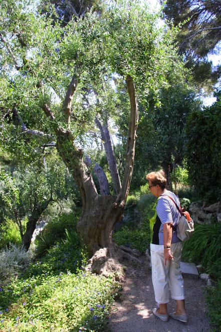 Bild:im provencialischen Garten des Musée Ephrussi de Rothschild