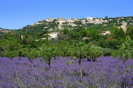 Bild: Lavendeltour hier unterhalb Gordes