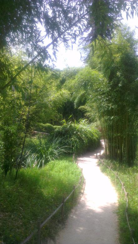 Bild: La Bambouseraie de Prafrance bei Anduze