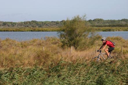 Bild: Radfahrer in der Camargue, Provence