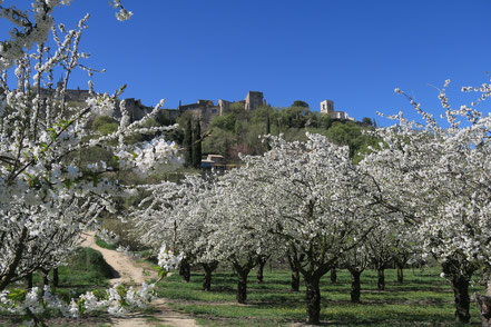 Bild: Blick auf Ménerbes im Frühling, Luberon, Provence