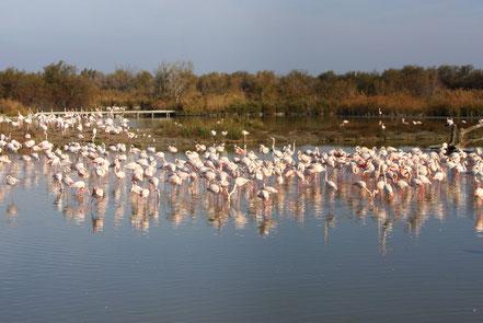 Bild: Parc ornithologique de Pont-de-Gau