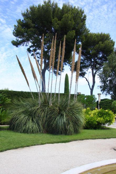 Bild:im französischen Garten des Musée Ephrussi de Rothschild