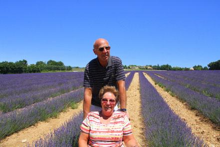 Bild: Lavendeltour hier im Lavendelfeld