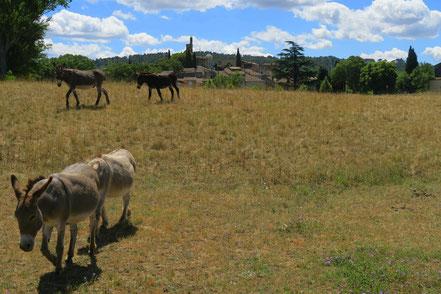 Bild: Lourmarin, Luberon, Provence