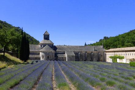 Bild: Lavendelroute hier: Abbaye Notre Dame de Sénaque