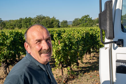 Bild: Traubenlese auf Vignobles Chasson-Château Blanc, Rossillon