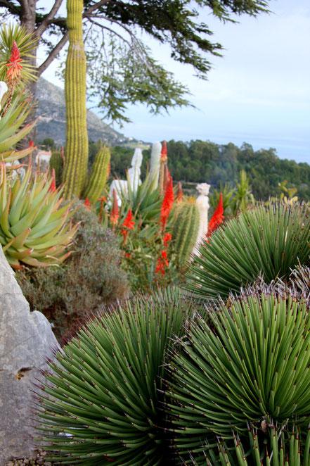 Bild: Exotischer Garten in Èze