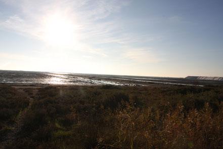 Bild: Salzgewinnung bei Salin-de-Giraud