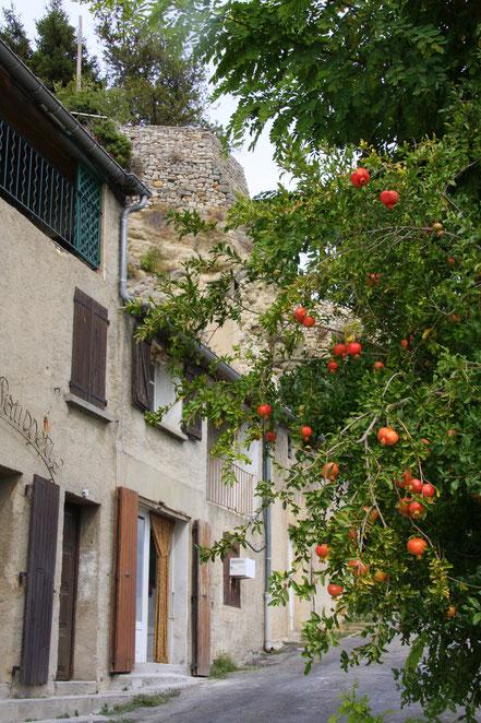 Bild: Granatapfelbaum in Lurs