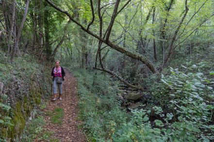 """Bild: Auf dem Weg zu den Wasserfällen """"Cascades du Sault du Loup"""""""