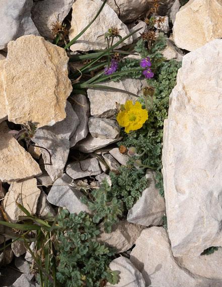 Bild: Mont Ventoux