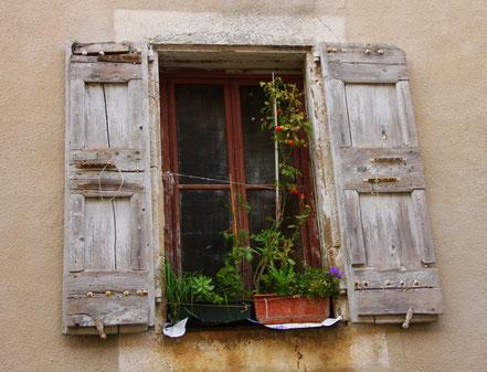 Bild: Tomaten wachsen am Fenster in der Provence