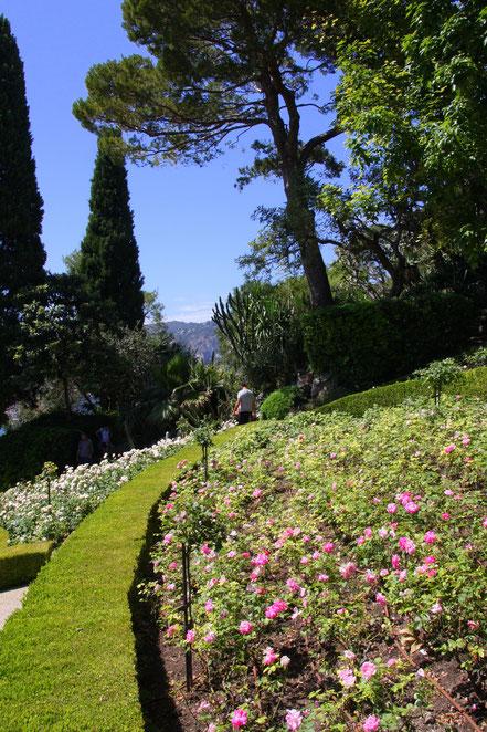 Bild:im Rosengarten des Musée Ephrussi de Rothschild