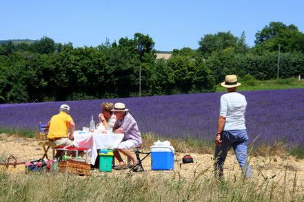 Bild: Lavendeltour Picknick im Lavendelfeld