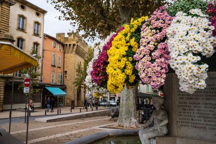 Bild: Salon-de-Provence