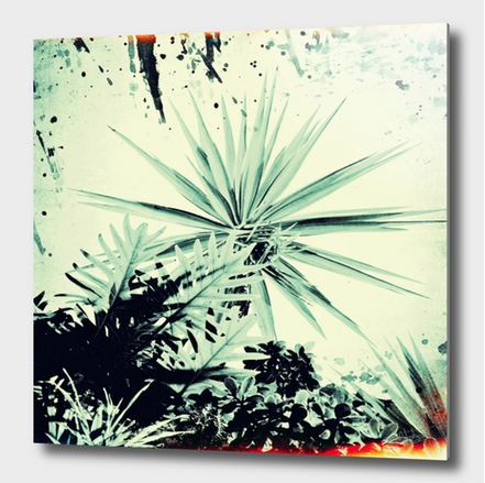 Abstract Urban Garden, vintage photograph available in my curioos shop as aluminum print