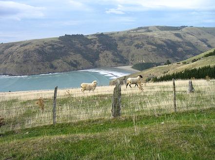 Cala a Le Bons Bay, Nova Zelanda.