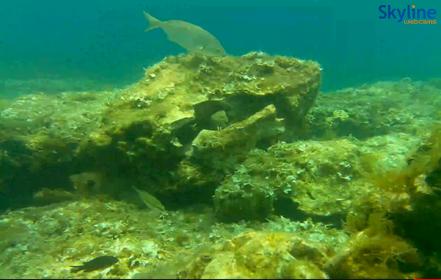 Càmera submarina a la badia de St Julians, Malta, web en directe.